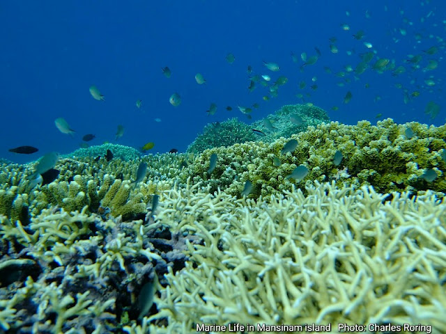 Marine life in coral reef