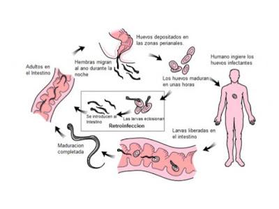 Focos transmisión parasitosis intestinal