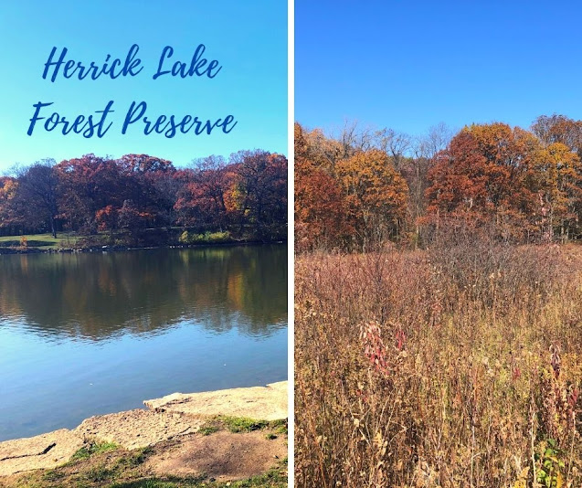 A Nest of Trails, Lake Views and Forest Treasures at Herrick Lake Forest Preserve in Wheaton, Illinois