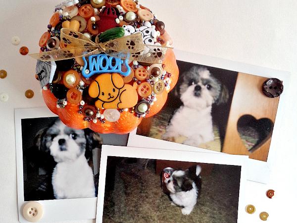 Buttons Galore & More: DIY Decorative Pet Pumpkin