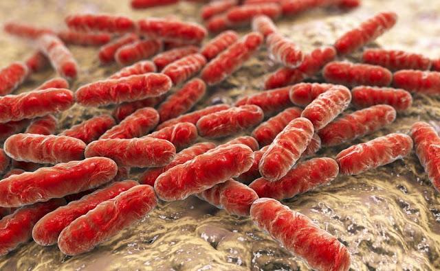 Czym jest mikrobiota?