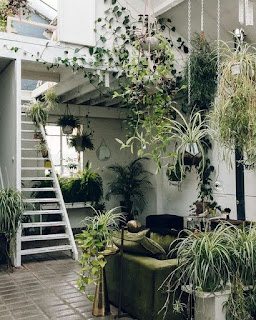 A plant-filled white room with a built-in white ladder going up to a loft.