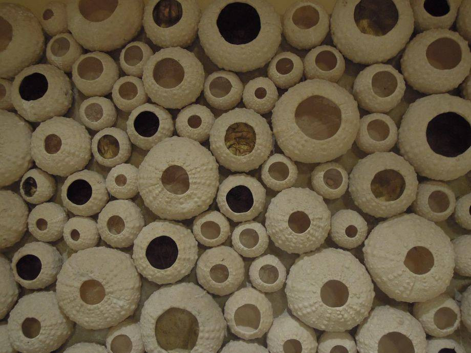 A wall decor of sea urchin shells at Shangri-La's Mactan Resort and Spa