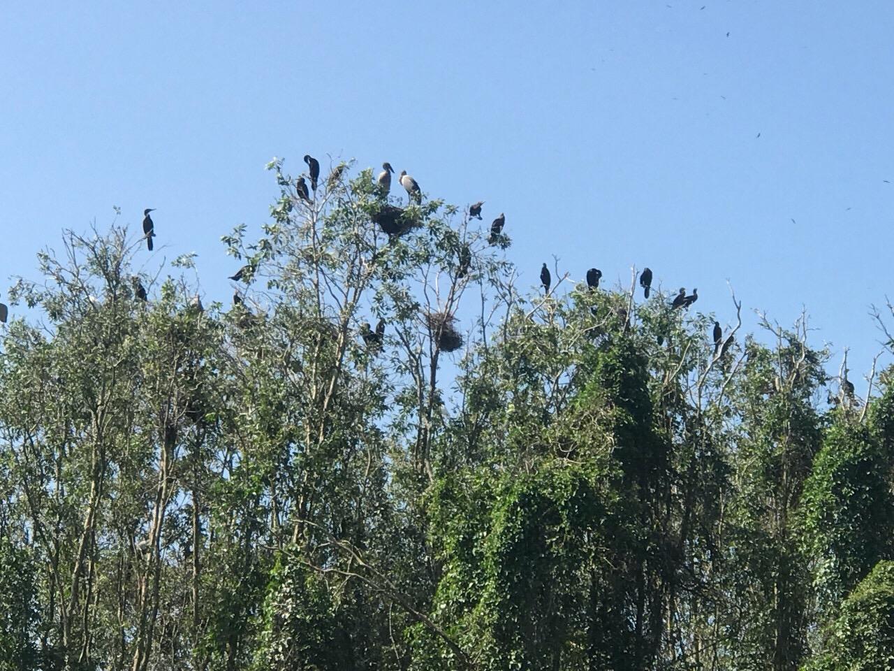 Ngắm chim Gáo Giồng - Tour du lịch miền tây 3 ngày 2 đêm