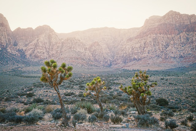 Joshua Tree, California