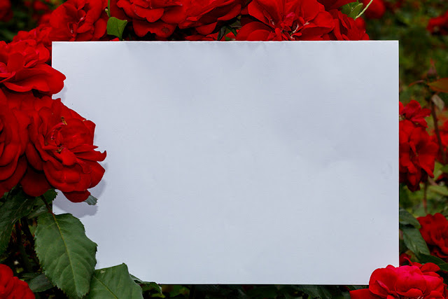Blank Paper Surrounded With Roses in Natural Environment Free JPEG Image