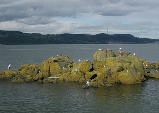 Inch Gnome, rocky island of garden gnomes and nesting sea gulls, near Inchcolm, Scotland
