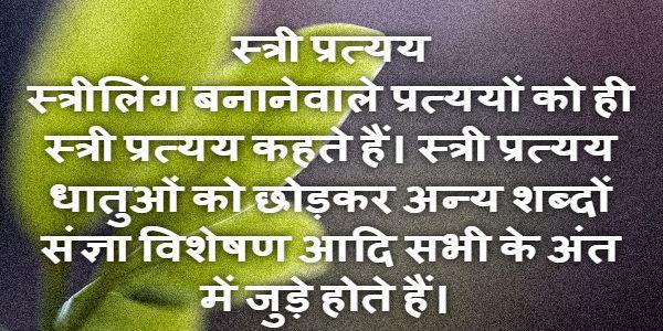 स्त्री प्रत्यय (Stree Pratyay)