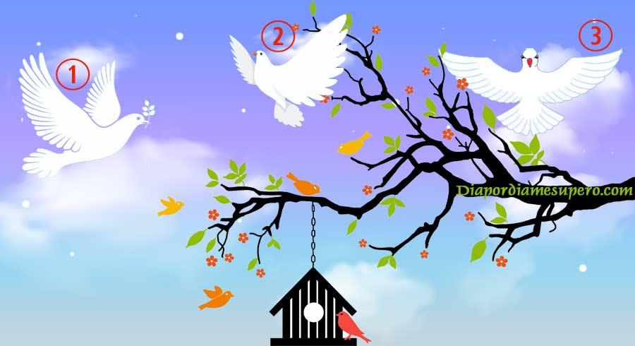Test: Elige tu paloma de la paz y recibe un hermoso mensaje de luz