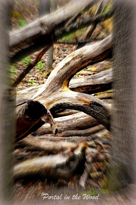 """Portal in the Wood"" Photo by Shawna Weidenbach"