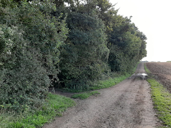 The unmarked Lilley bridleway 21 on the left, mentioned in point 3 above Image by Hertfordshire Walker released via Creative Commons BY-NC-SA 4.0