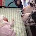 Αυτοί οι γονείς άφησαν το μωρό τους μόνο του με το σκύλο. Όταν επέστρεψαν, Βρήκαν ΑΥΤΟ.