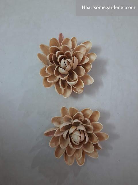 Pista shell diy flowers