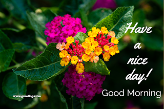 Have a nice day multi colour flowers image with pink yellow red flowers