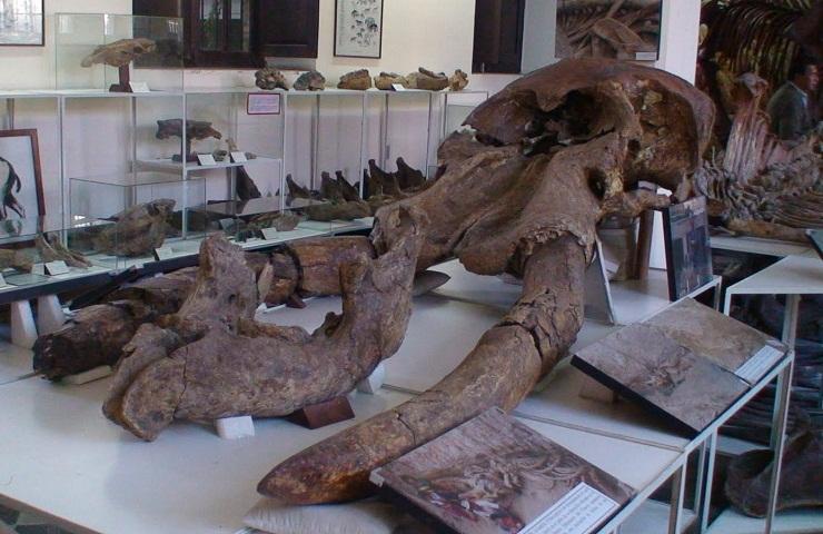 Paleontologia Tarija Bolivia