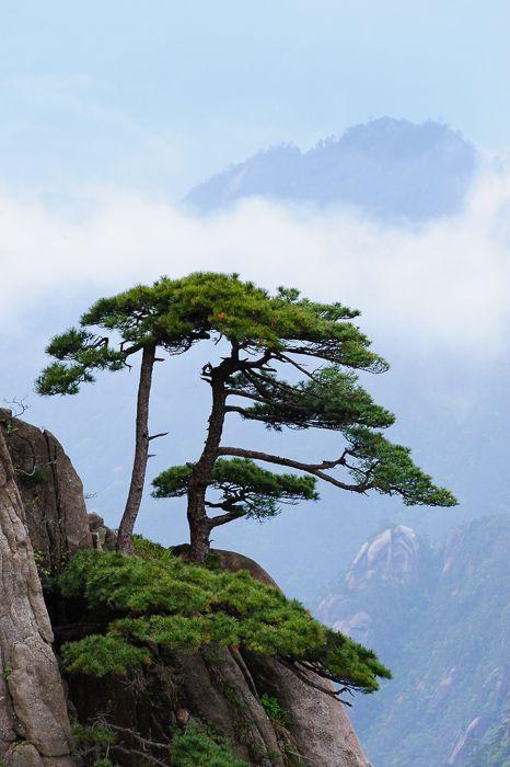 ต้นไม้มงคลเสริมฮวงจุ้ย