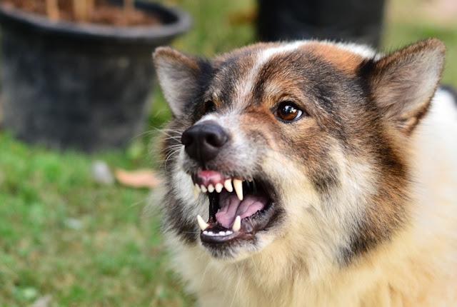 Fatti su cosa provoca l'attacco dei cani: cosa fare quando si presenta un reclamo per morso di cane