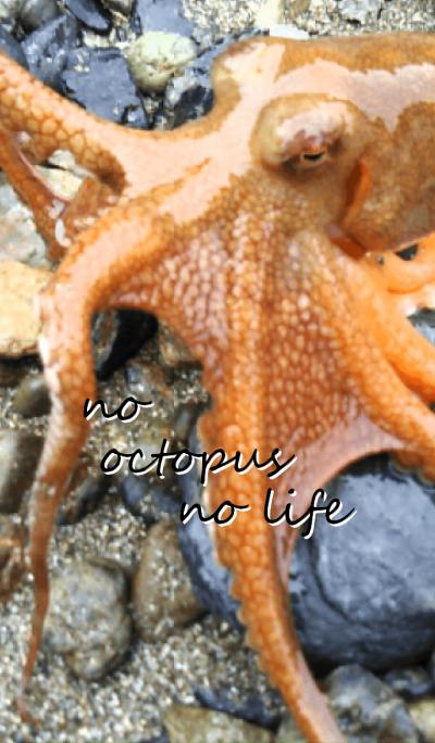 octopus theme