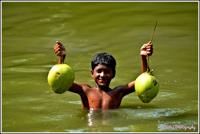 Green Coconut - Nijhum Dwip, Nijhum Dwip Sea Beach, Virgin Island Sea Beach, Nijhum Island Hatia, Trip Navigation Bangladesh, Nijhum Dwip Travel Guide