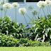 Dieron a conocer bases y condiciones del concurso de embellecimiento de parterres y jardines