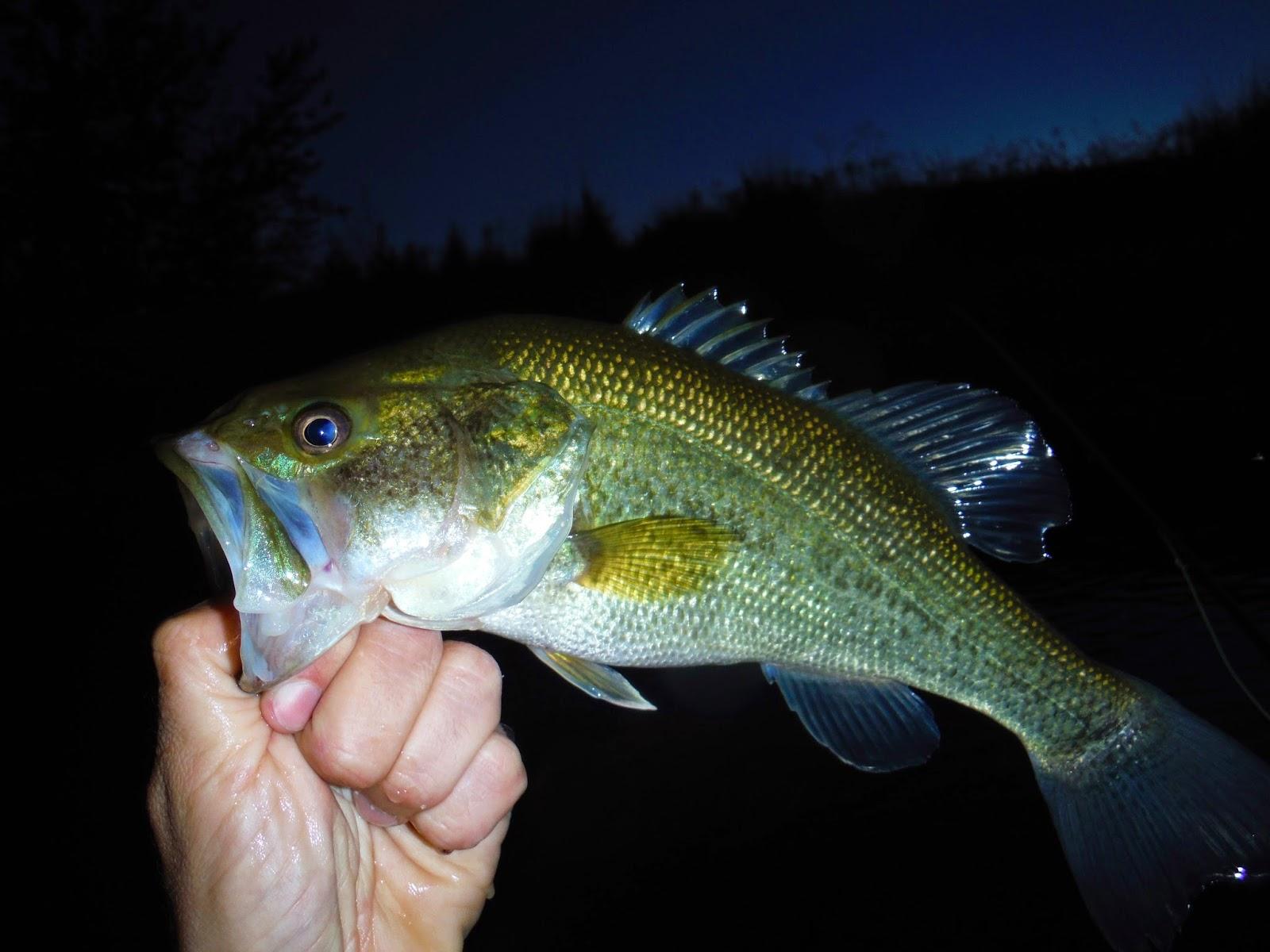 Erik's Fly Fishing Blog: Fishing Sawyer's Pond