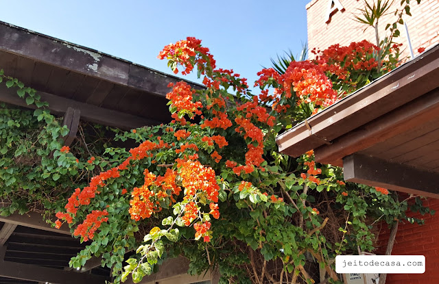 orange- bougainvillea