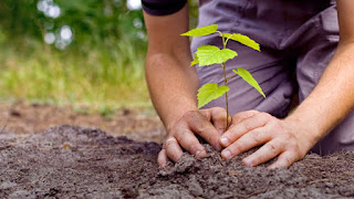 Programa da UFCG contribui para reflorestamento no Curimataú paraibano