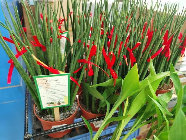 Gardening Buys at SM Supermalls