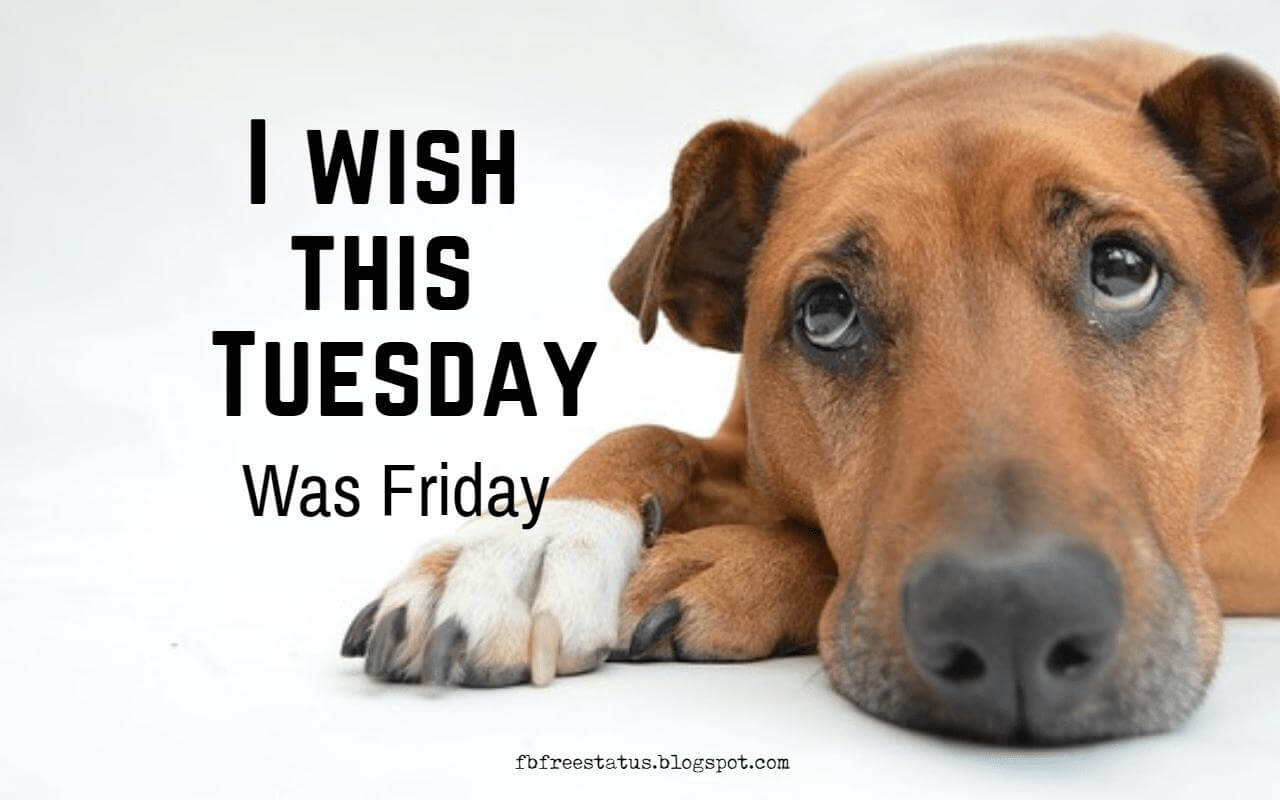 I wish this Tuesday was Friday Quote.
