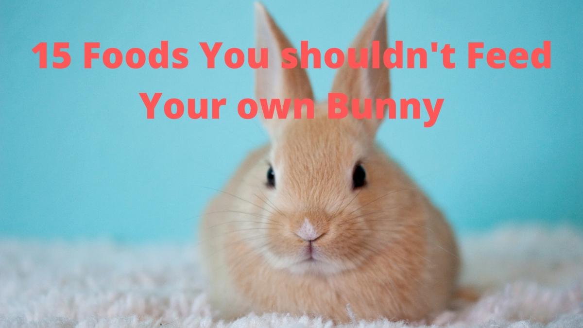 15 Foods You shouldn't Feed Your own Bunny