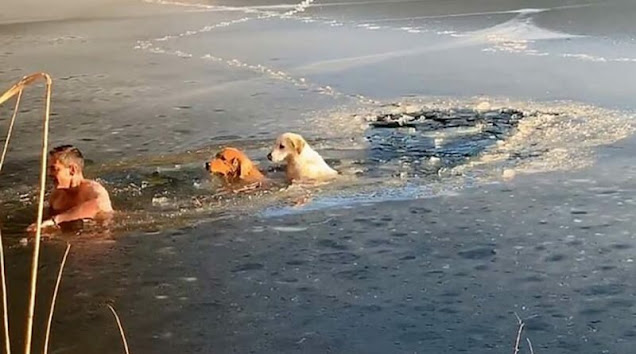 45-летний мужчина спас провалившихся под лёд собак