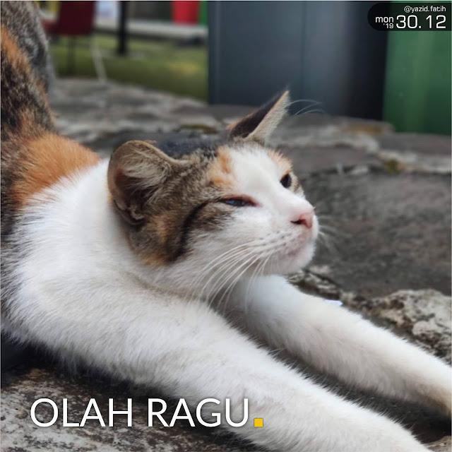 Olah Ragu