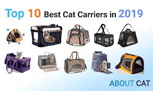 Top 10 Best Cat Carriers in 2019