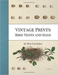 vintage bird and egg prints in book