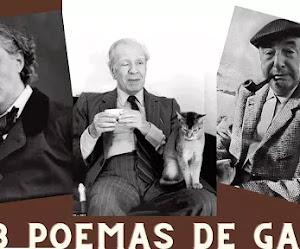 3 grandes de la literatura y sus poemas de gatos