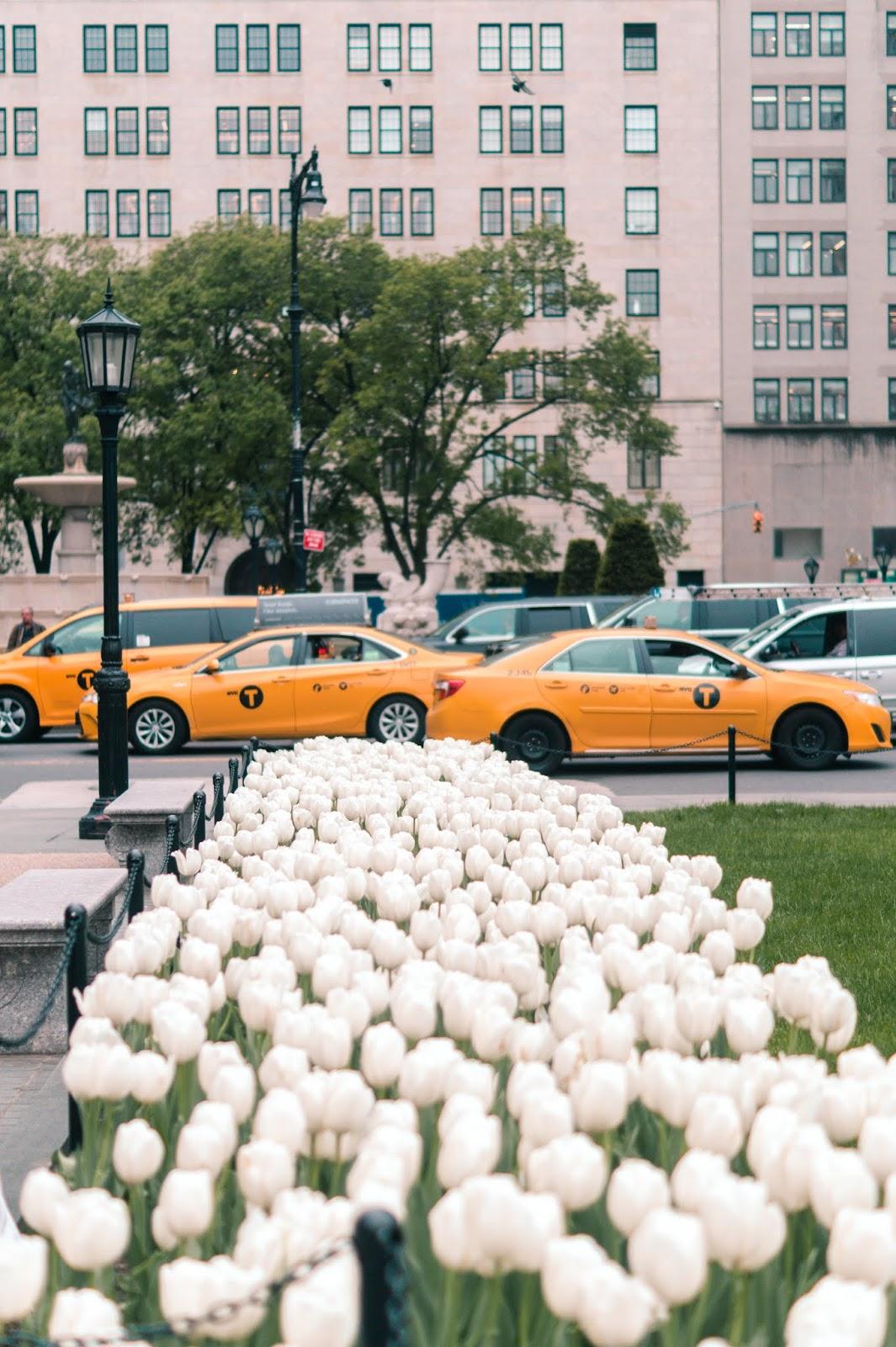 city guide New York mai