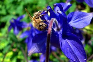 Biene, con ong, Bee, пчела, abeja, abeille, пчела, včela, mehiläinen, μέλισσα, ape, 蜂, abella, pčela, bitė, honingbij, bie, pszczoła, abelha, albină, пчела,