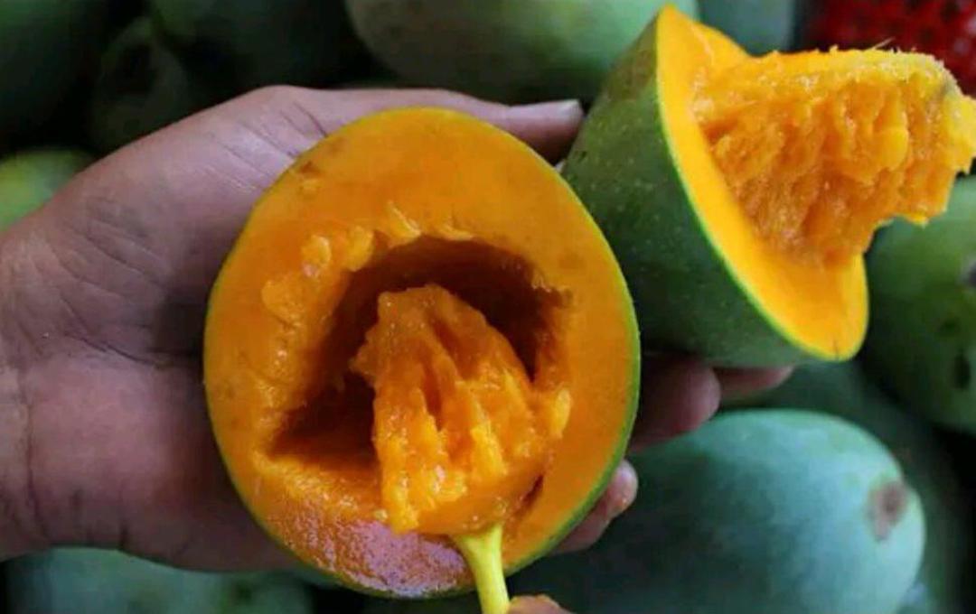 Laris! Bibit Tanaman Buah Mangga Alpukat Kota Bogor #bibit buah genjah