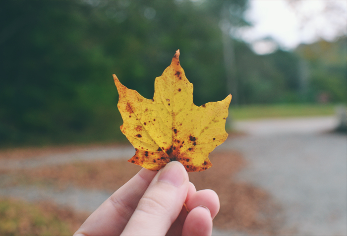 holding a yellow leaf