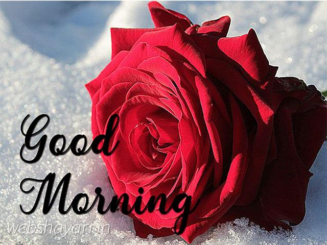 good morning rose flower for girl friend wish