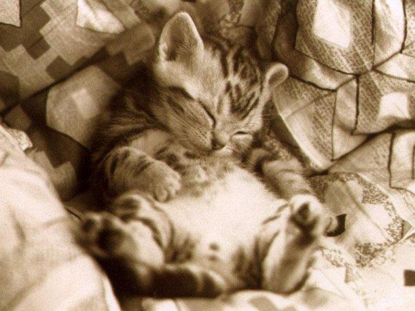 anak kucing tidur atas tilam
