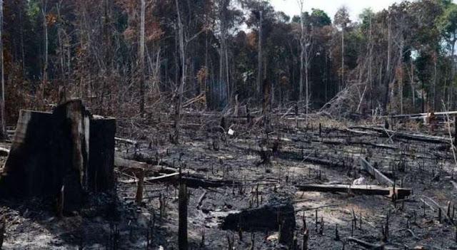 Paraense de Novo Progresso aparece na lista dos maiores desmatadores da Amazônia