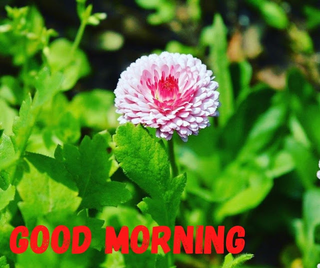 good morning photo with flower and cat