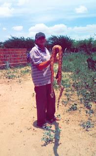 Agricultor mata cobra de 7 kg dentro do quarto das netas no município de Pedra Lavrada