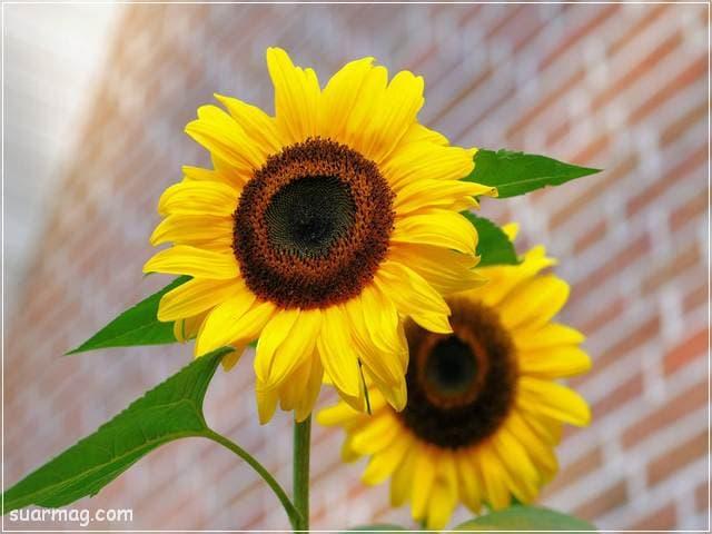 صور زهور 7 | Flowers Images 7