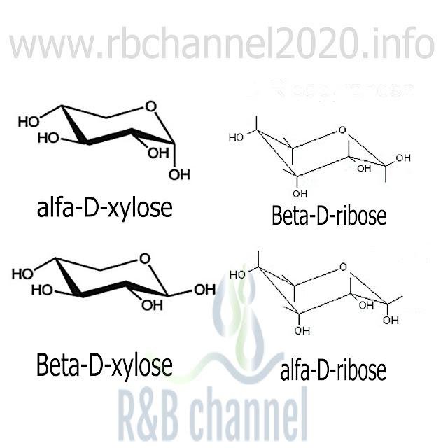 الفا -D-ريبوز \ الفا -D-كسيلوز