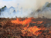 Technology and methods applied by Indonesian to overcome peatland fires