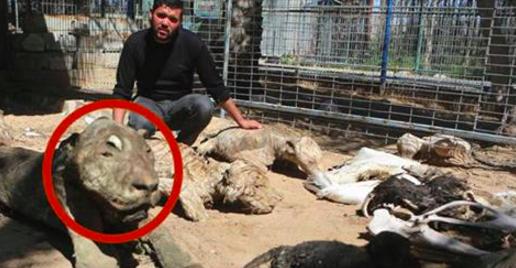 Les travailleurs humanitaires débarquent au zoo et sont assaillis par une odeur épouvantable. Lorsqu'ils voient ce qu'il s'est passé, ils ne peuvent s'empêcher de fondre en larmes.