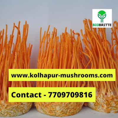 Cordyceps mushroom farming & training center
