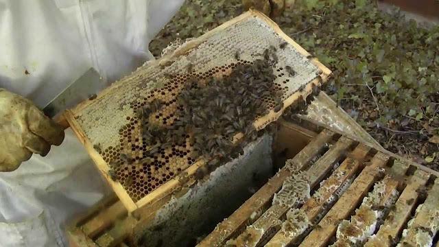 Πωλούνται μελισσοκομικά προϊόντα κορυφαίας ποιότητας στην Θεσσαλονίκη